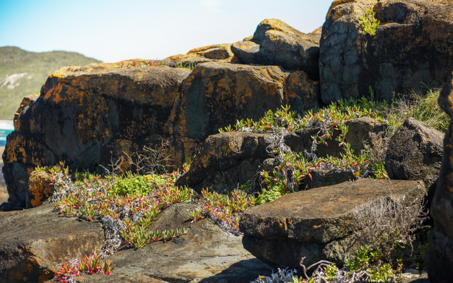 Creating photoreal graphics with Megascans rendered in Redshift