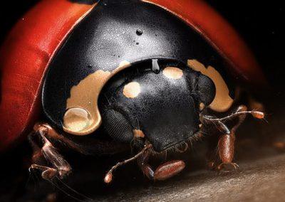 denis-bodart-lady-bug-art-vray-3ds-max-thumb