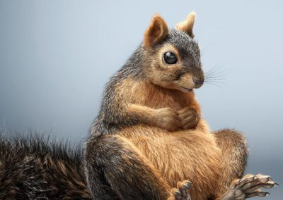 lorett-foth-squirrel-art-vray-3ds-max-thumb
